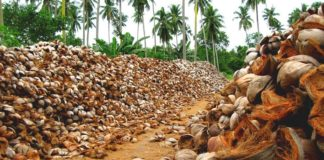 WebMDI Fire Resistant Coconut Husks Can Replace Wood 02